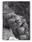 Grizzly Bear Paw Black And White Spiral Notebook