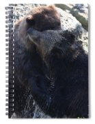 Grizzly Bears Fighting Spiral Notebook