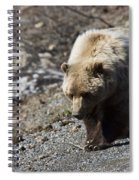 Grizzly By The Road Spiral Notebook