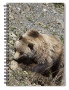 Grizzly Digging Spiral Notebook