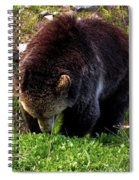 Grizzly Grazing Spiral Notebook