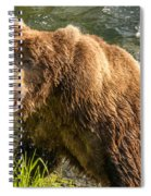 Grizzly On The River Bank Spiral Notebook