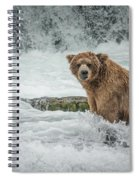 Grizzly Stare Spiral Notebook