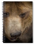 Grizzly Upclose Spiral Notebook