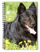 Groenendael Dog Spiral Notebook
