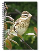 Grosbeak Spiral Notebook