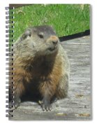 Groundhog Holding A Stick Spiral Notebook