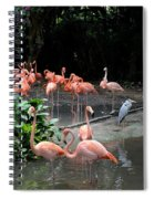 Group Of Flamingos And Lone Heron In Water Spiral Notebook