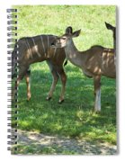 group of Kudu Antelope Spiral Notebook