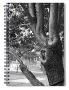 Growth On The Survivor Tree In Black And White Spiral Notebook
