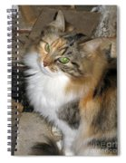 Grumpy Kitty With Emerald Eyes Spiral Notebook