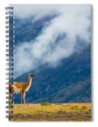Guanaco Mother And Child Spiral Notebook