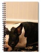 Guilt Spiral Notebook