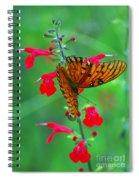 Gulf Fritillary 1 Spiral Notebook