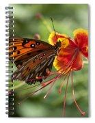 Gulf Fritillary Photo Spiral Notebook