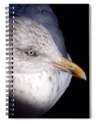 Gull #2 Spiral Notebook