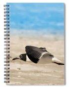 Gull At Lido Beach Iv Spiral Notebook
