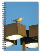 Gull On Guard Spiral Notebook