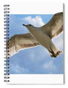 Gull - Out Of Bounds Spiral Notebook