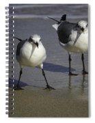 Gulls On The Beach Spiral Notebook