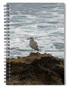 Gulls Podium  Spiral Notebook