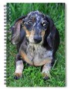 Gus The Dappled Miniature Dachshund Spiral Notebook