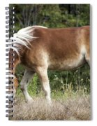 Haflinger 1 Spiral Notebook