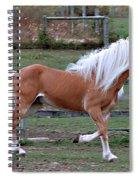 Haflinger Stallion Spiral Notebook