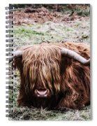 Hairy Cow Spiral Notebook