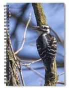 Hairy Woodpecker - Female Spiral Notebook