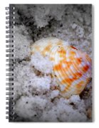 Half Buried Shell Spiral Notebook