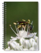 Halicid Bee Amongst The Anthers Spiral Notebook