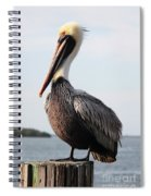 Handsome Brown Pelican Spiral Notebook