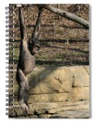 Hanging Chimp 365 Spiral Notebook