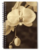 Hanging Orchid Spiral Notebook