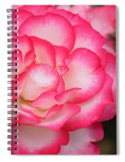 Hannah Gordon Floribunda Rose Spiral Notebook