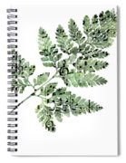 Happy Adventure Music Fern Spiral Notebook