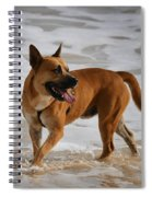 Happy Dogs 5 Spiral Notebook