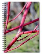 Happy In The Sun Spiral Notebook