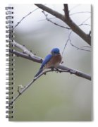 Happy Song Spiral Notebook