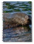 Harbor Seal At Low Tide Spiral Notebook