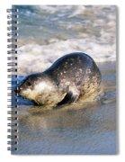 Harbor Seal Spiral Notebook