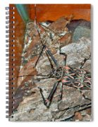 Harlequin Beetle In Butterfly Botanical Garden In Manuel Antonio-costa Rica Spiral Notebook