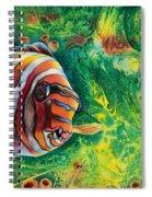 Harlequin Tuskfish Spiral Notebook