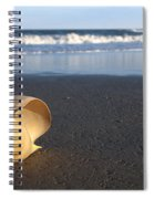 Harp Shell On Beach Spiral Notebook