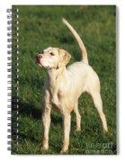 Harrier Dog Spiral Notebook