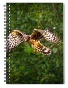 Harrier Hunt Spiral Notebook