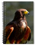 Harris Hawk In Thought Spiral Notebook