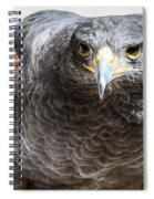 Harris Hawk Ready For Attack Spiral Notebook
