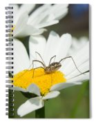 Harvastman On Daisy Looking For Food Spiral Notebook